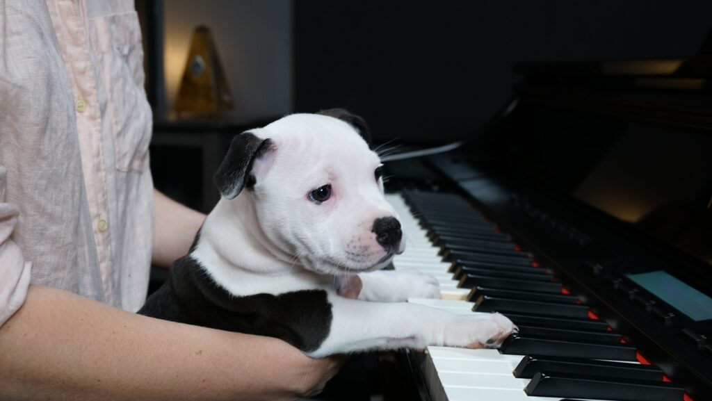 Lisa holds black and white dog in front of piano, paws on keyboard.